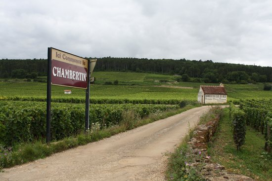 Burgundy Discovery: The grapes