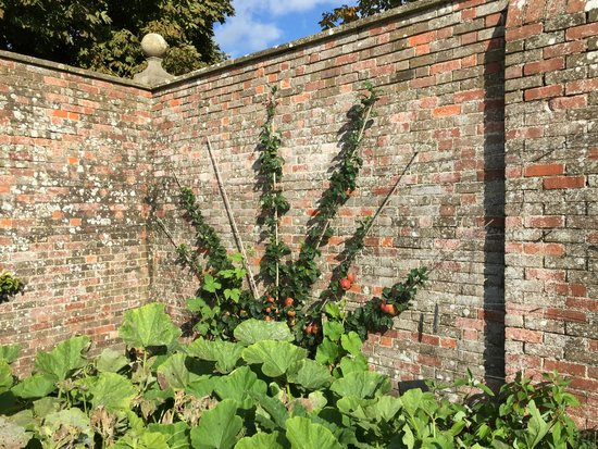 Avebury Manor: How do you like them apples?