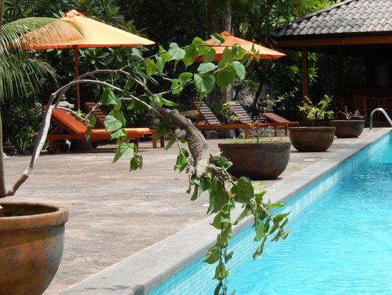 The Bodhi Tree Yoga Resort: Nature