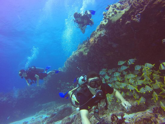 Scuba Playa Dive Shop : Awesome Diving