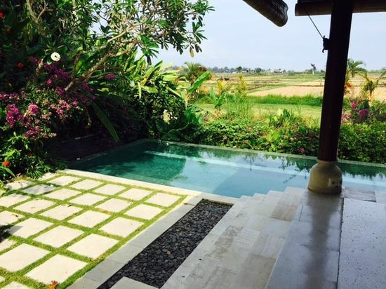 Tamu Seseh: The private perfect temp pool...