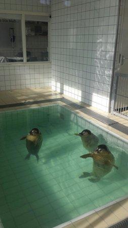 Zeehondencentrum Pieterburen: Bij de zeehondencrèche, een bassin binnen.