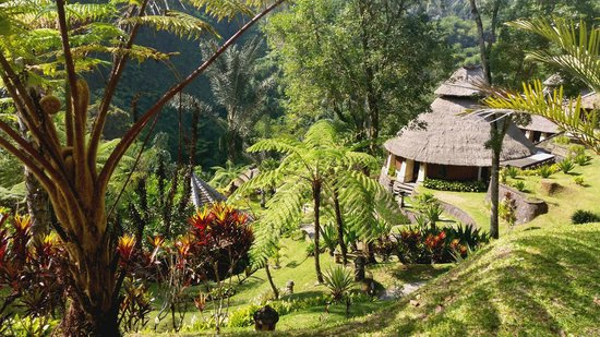 Bagus Jati Health & Wellbeing Retreat: View over pool and spa area