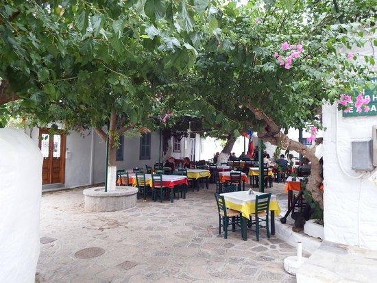 Xeri Elia Douskos: Lovely shade area