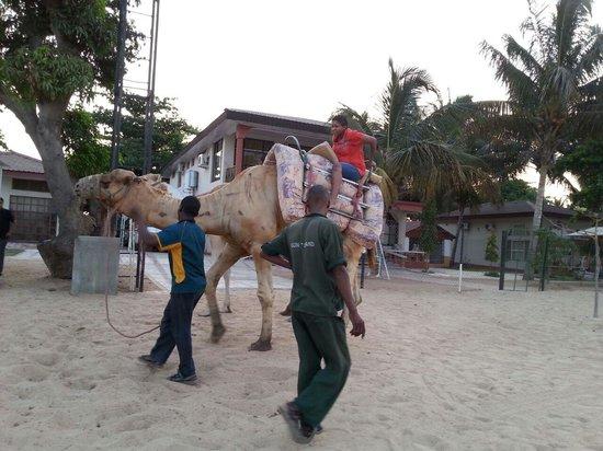 Sun n Sand Holiday Resort: 201211