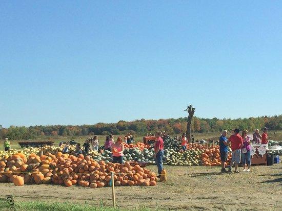 Chemin Royal (Royal Road) : Piles of pumpkins and squash