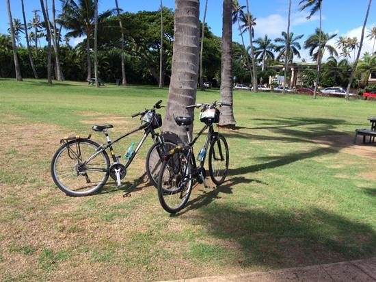 Hawaiian Style Rentals & Sales : stopped at a park on our ride to Diamond Head Crater