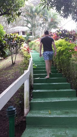 Koro Sun Resort and Rainforest Spa: Half of the many stairs to get to our room.
