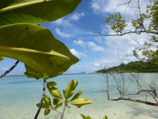 เกาะพราสลิน, เซเชลส์: Curieuse Island