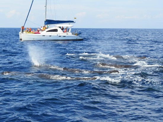 Dream Palace Family Guest House: Whale watching tour