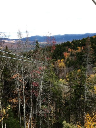 Bretton Woods Canopy Tour: Zip line