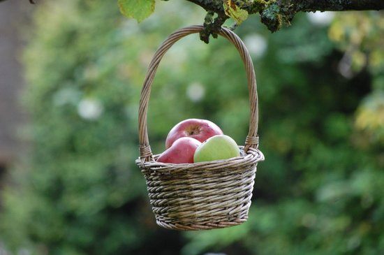 Yew Tree Cottage Bed and Breakfast: Even apples adorn the trees!