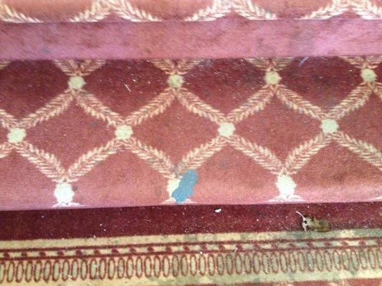 Best Western Plus Valemount Inn & Suites: Filthy carpet