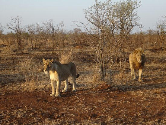 Shishangeni Private Lodge: We found our lions!