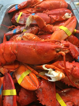 Nordic Lodge Fresh Hot New England Lobster As Much You Can