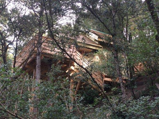 l 39 acc s la cabane picture of les cabanes dans les bois. Black Bedroom Furniture Sets. Home Design Ideas
