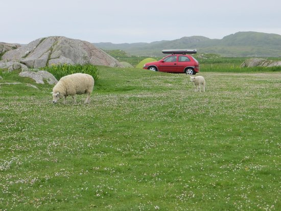 Fidden Farm : surroundings