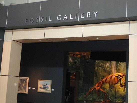 Tellus Science Museum : dinosaur room