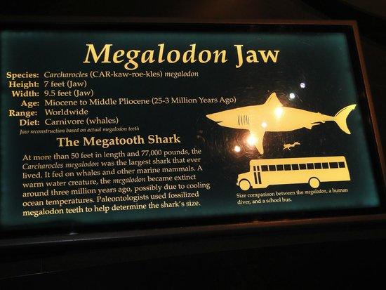 Tellus Science Museum : big shark