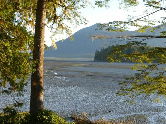 Black Bear Guesthouse: Inlet of Clayquot Sound from Osprey Room