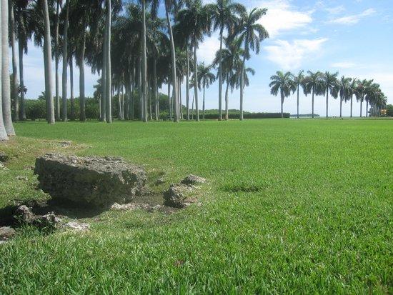 Deering Estate: back yard
