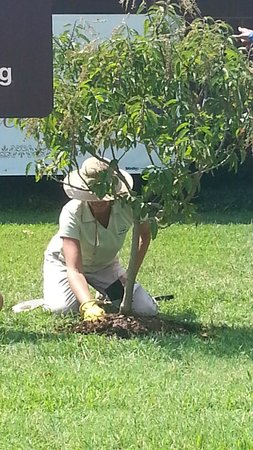 Dawson Springs, KY: 60th Anniversary Tree Planting