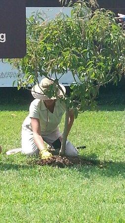 Dawson Springs, Kentucky: 60th Anniversary Tree Planting