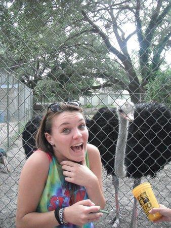 Waccatee Zoo : Gabby and her Buddy!