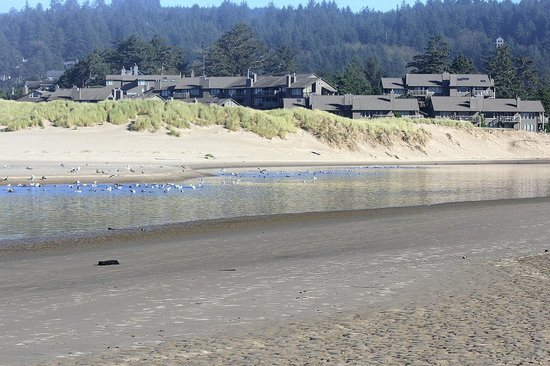 Ecola Creek Lodge: townhomes between lodge and beach