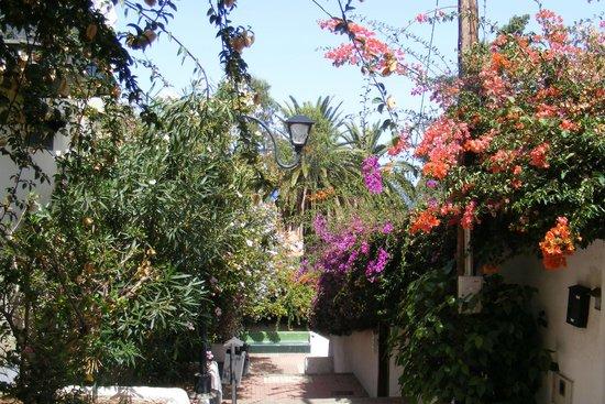 Botanische tuin op loopafstand van het hotel fotograf a for Botanische tuin tenerife