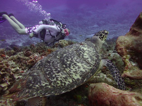 Grand Park Royal Cozumel : Sea Turtle and Me- Drift Dive