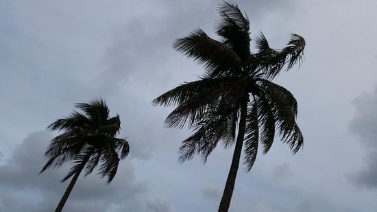Mitchell's Sandcastles: Sitting at Mitchell's Sandcastle looking at the coconut palms