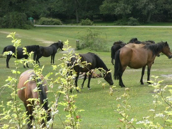 The Willows: Ponies grazing locally