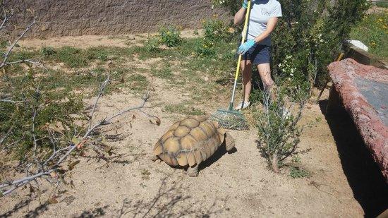 Heritage Park Zoo: Tortoise