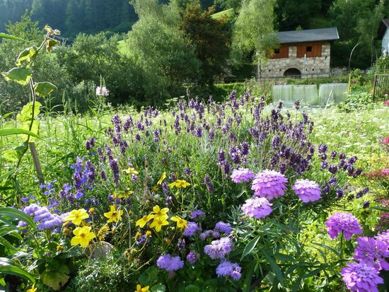 Hotel Dosses: les belles  fleurs dans les belles montagnes