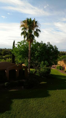 La Posada Lodge and Casitas: Center greenbelt - Palm trees were full of birds and song!