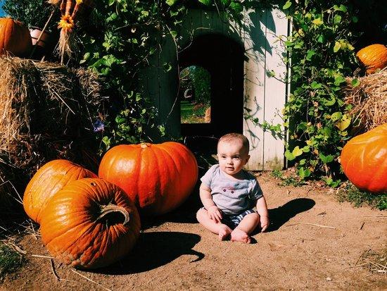 Harbes Family Farm: The hobbit house