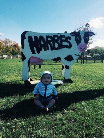 Harbes Family Farm: Harbes Farm!