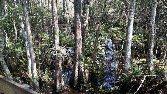 Six Mile Cypress Slough Preserve: Tolle Gegend