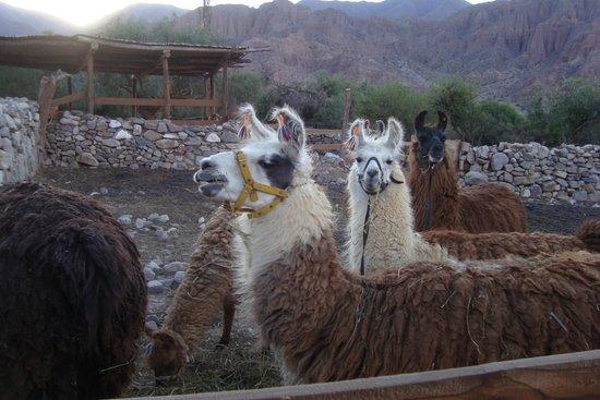 Caravana De Llamas Day Tours: Hermoso!!!!!!