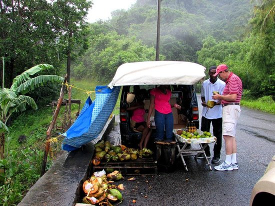Fabian Tours: Sampling Coconut water in St. Lucia