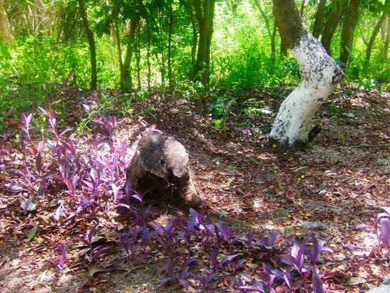 Hacienda Mundaca: Brush in the park