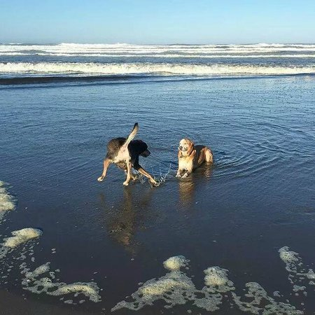 Lighthouse Oceanfront Resort: Our dogs love it here!