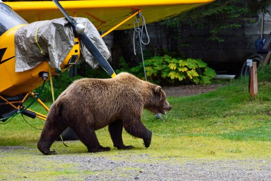 Alaska Homestead Lodge: The Visitor