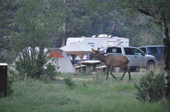 Ospite Inatteso Picture Of Aspenglen Campground