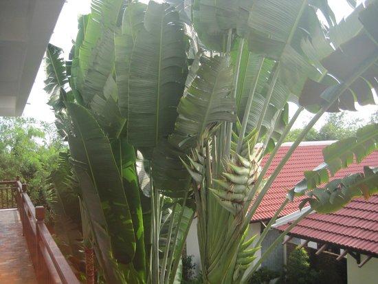 Hoi An Riverside Bamboo Resort : Bamboo....