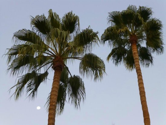 DoubleTree by Hilton Bakersfield: vue palmier de piscine