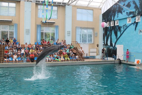 Kislovodsk Dolphinarium