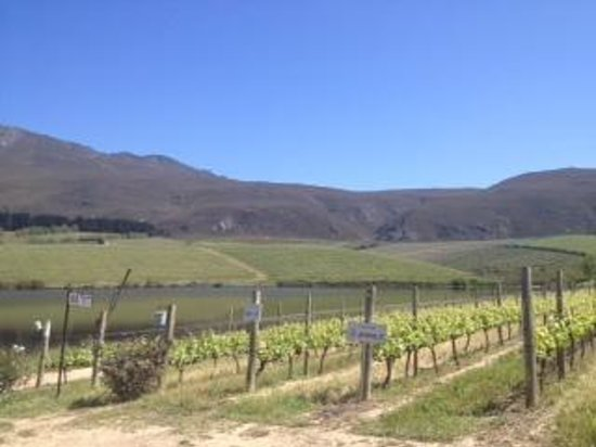 C.Tours - Day Tours: Creations winery, Hermanus