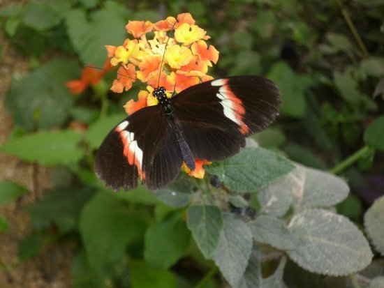 The North Somerset Butterfly House: beautiful butterfly